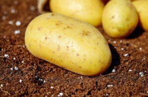 potatoes-